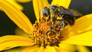 Comprar Forever Bee Pollen Bolivia